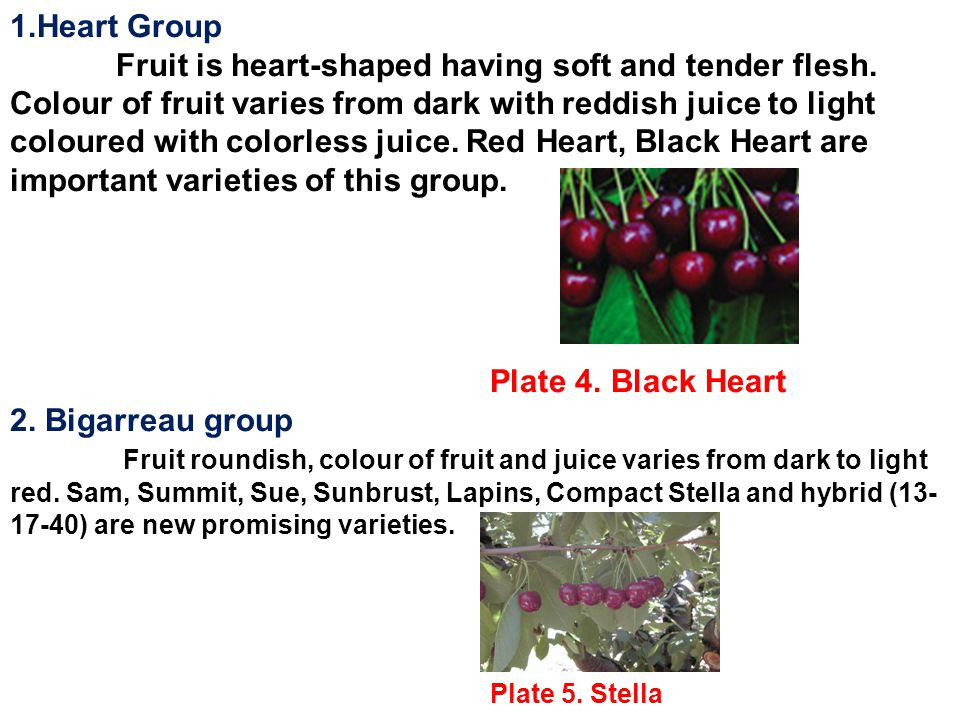 1.Heart Group