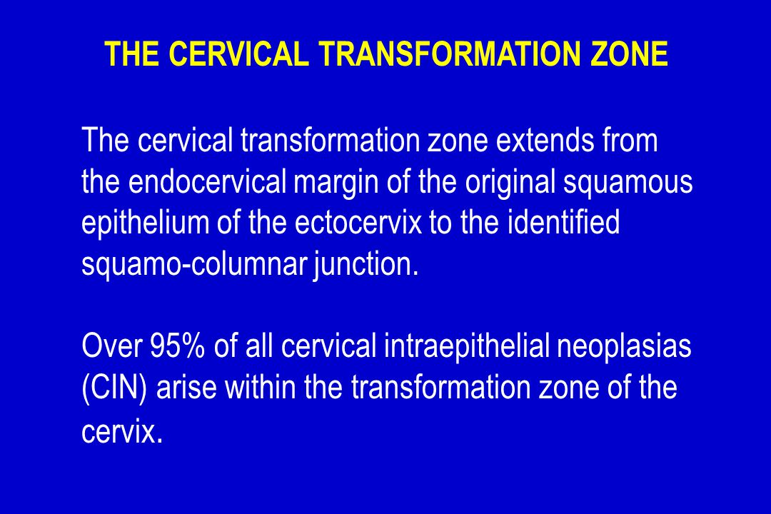 THE CERVICAL TRANSFORMATION ZONE