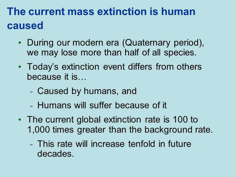 The current mass extinction is human caused