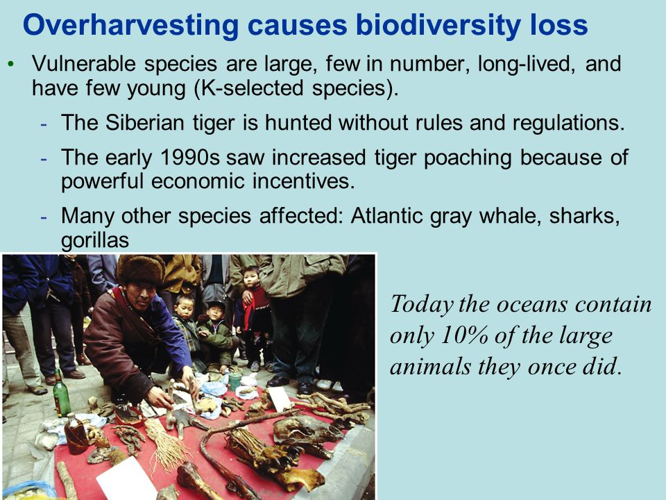 Overharvesting causes biodiversity loss