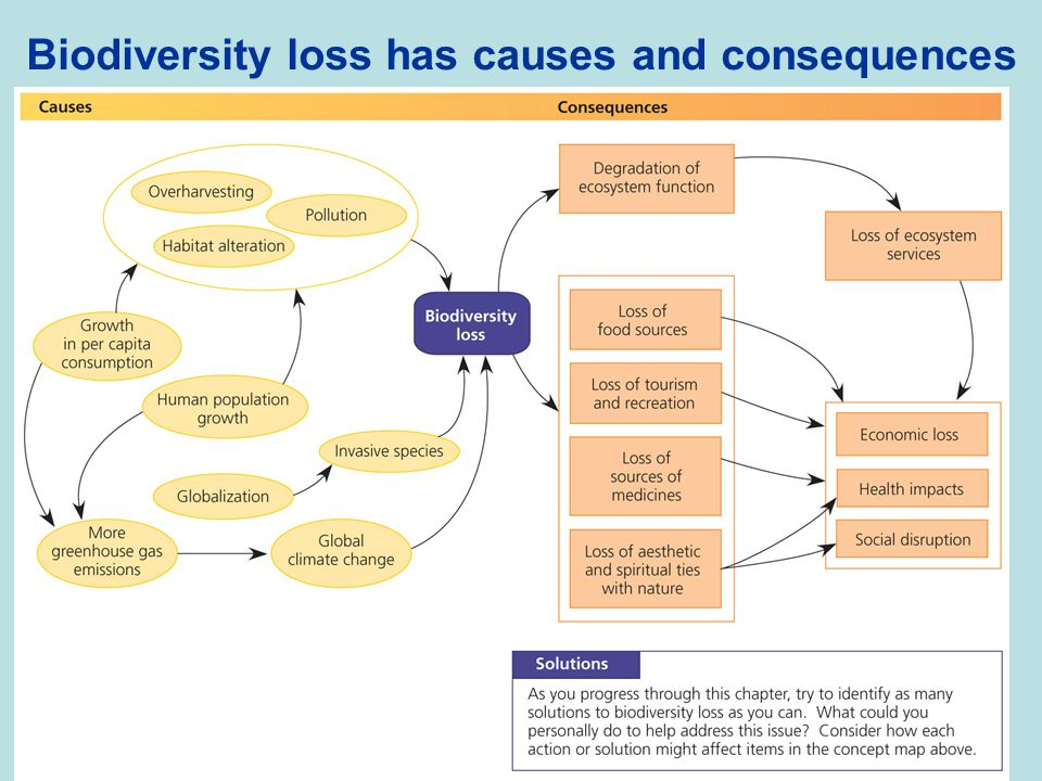 Biodiversity loss has causes and consequences