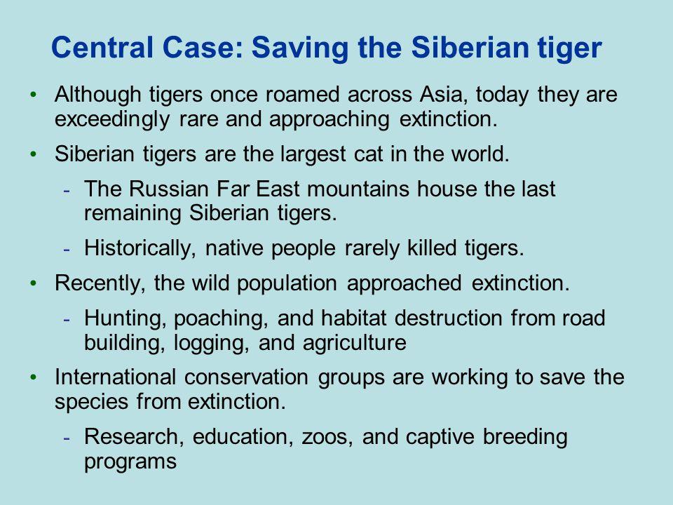 Central Case: Saving the Siberian tiger