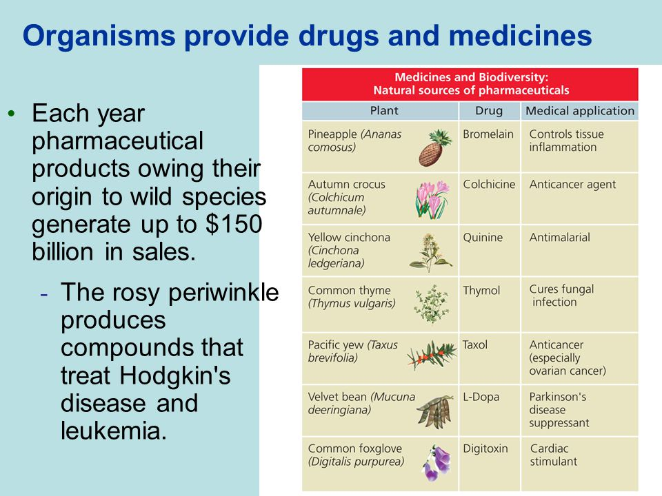 Organisms provide drugs and medicines
