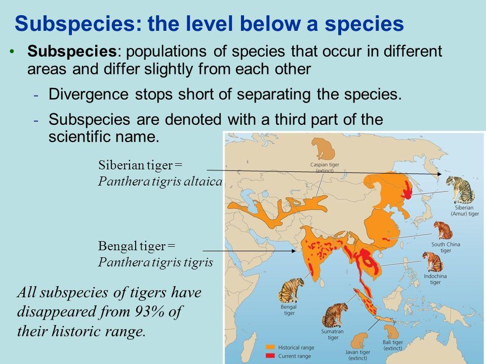 Subspecies: the level below a species