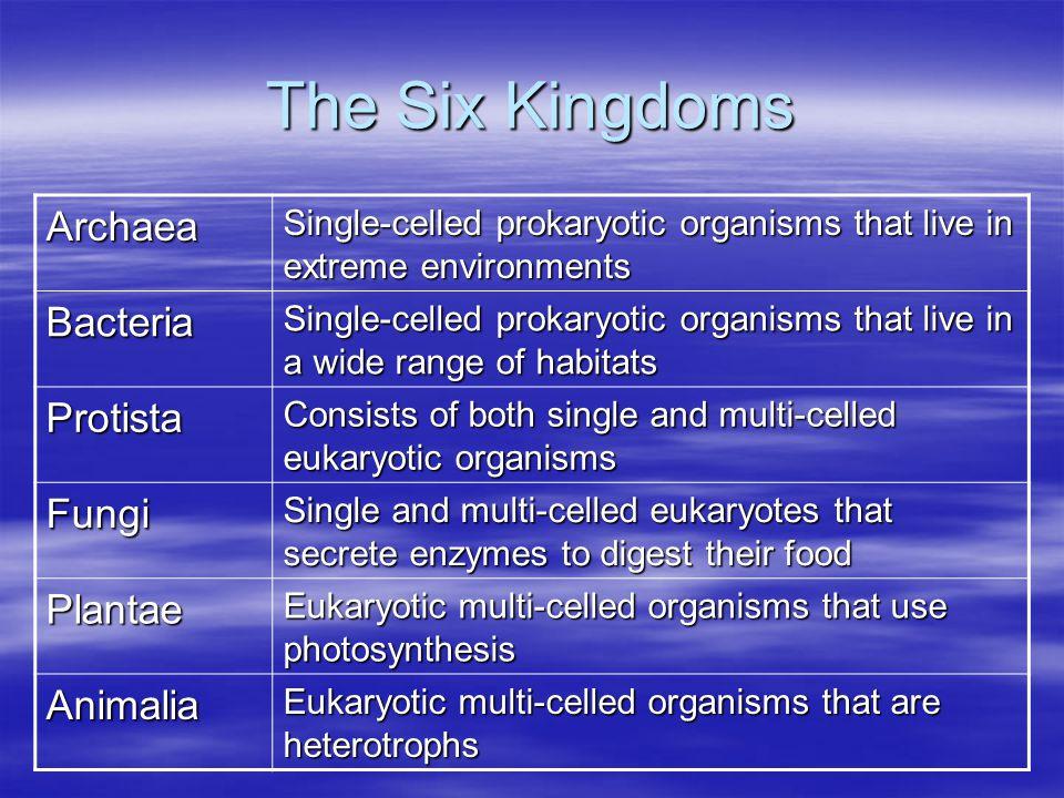 The Six Kingdoms Archaea Bacteria Protista Fungi Plantae Animalia