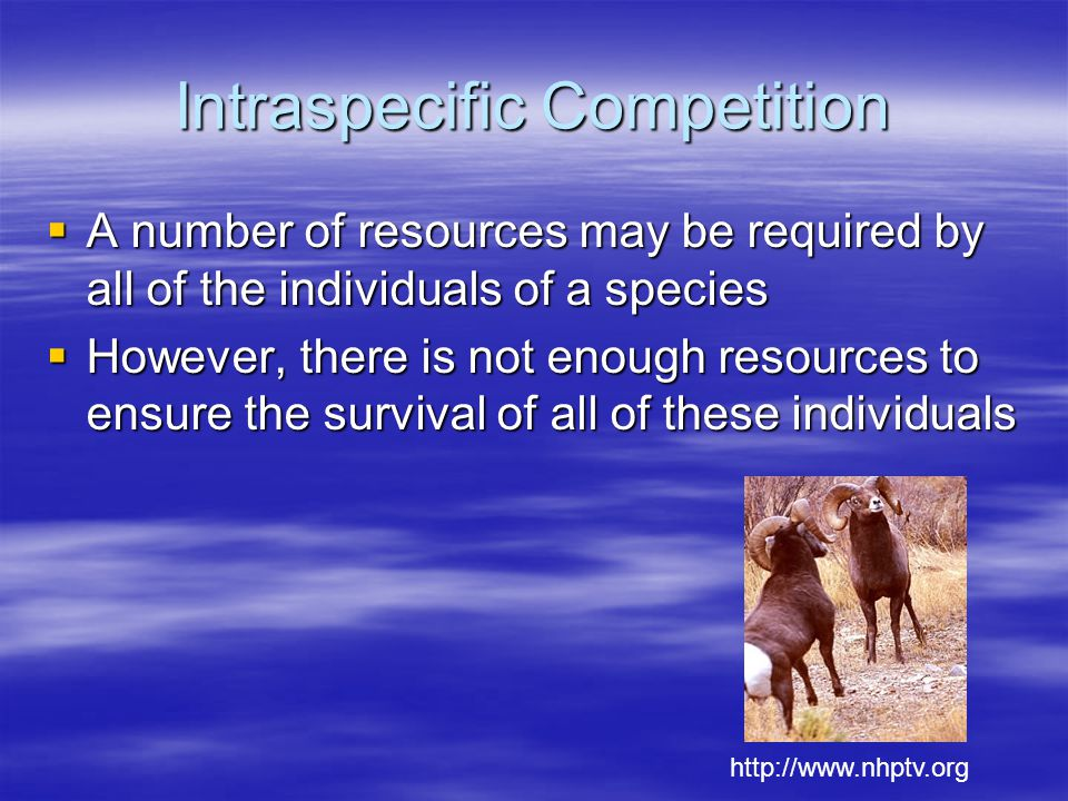 Intraspecific Competition