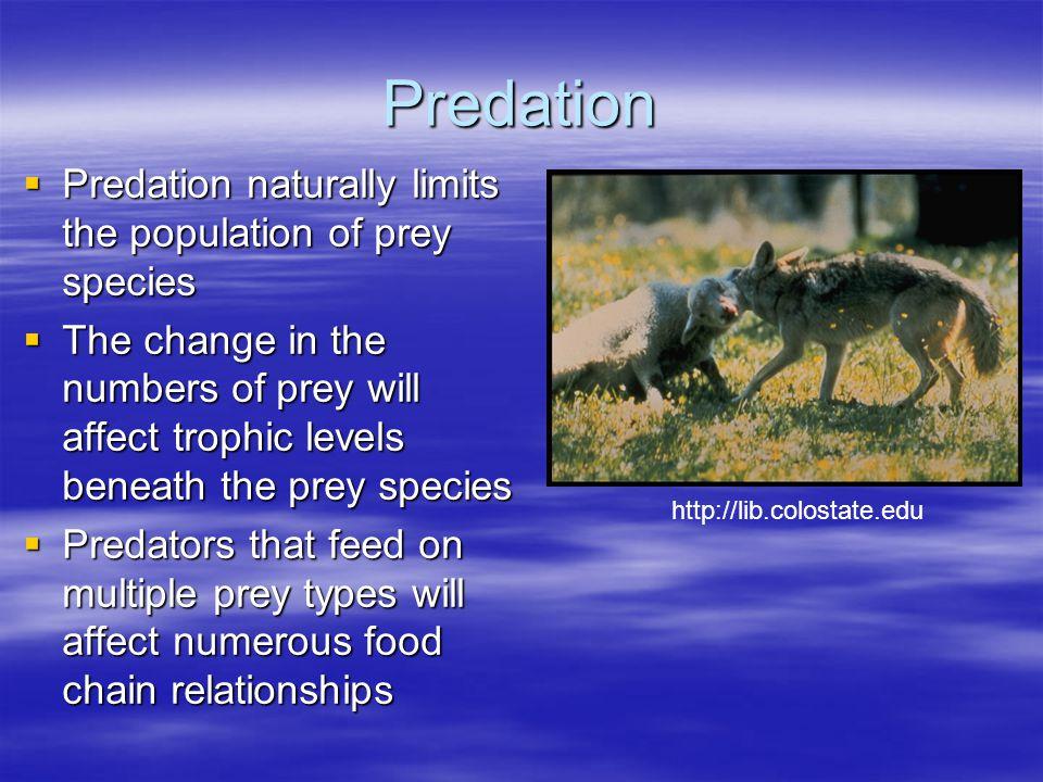 Predation Predation naturally limits the population of prey species