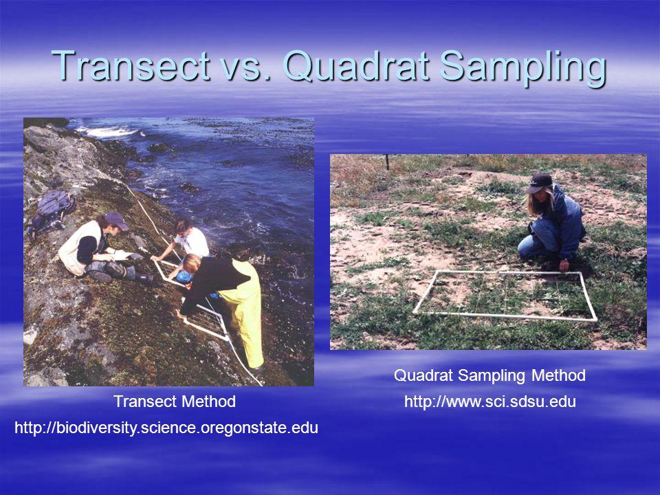 Transect vs. Quadrat Sampling
