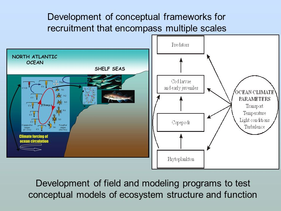 Development of conceptual frameworks for