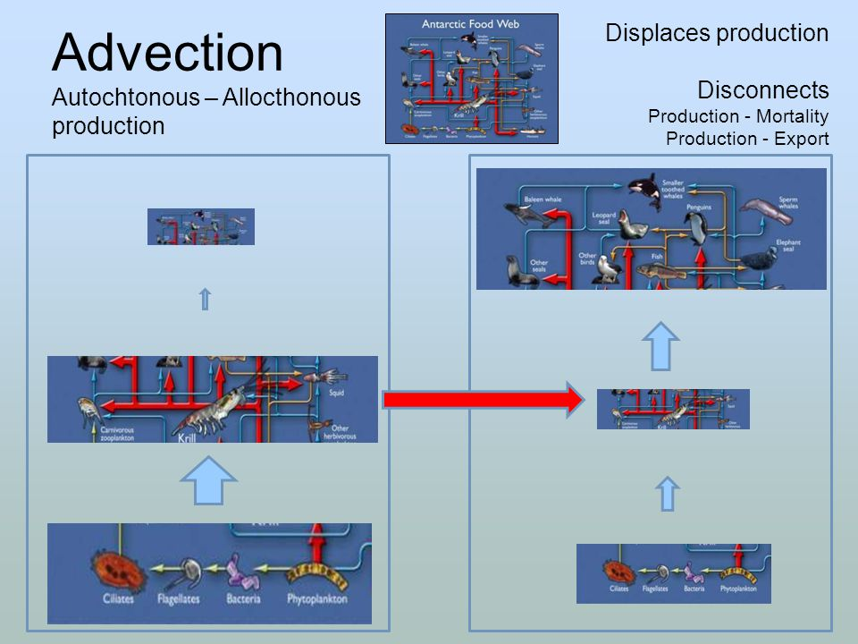 Advection Autochtonous – Allocthonous production