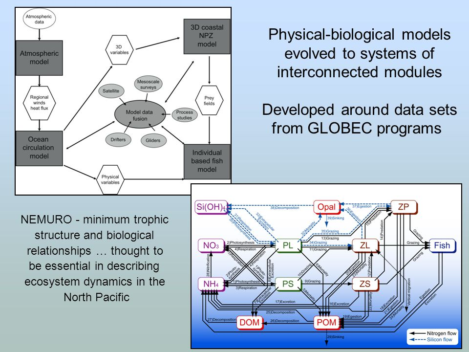 Physical-biological models evolved to systems of