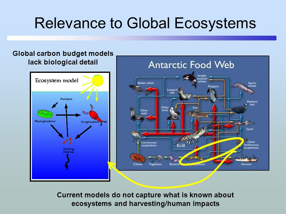 Relevance to Global Ecosystems