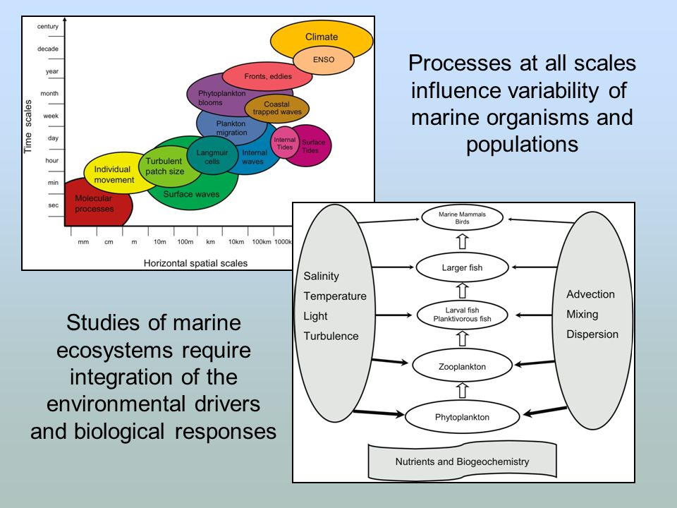Processes at all scales influence variability of marine organisms and