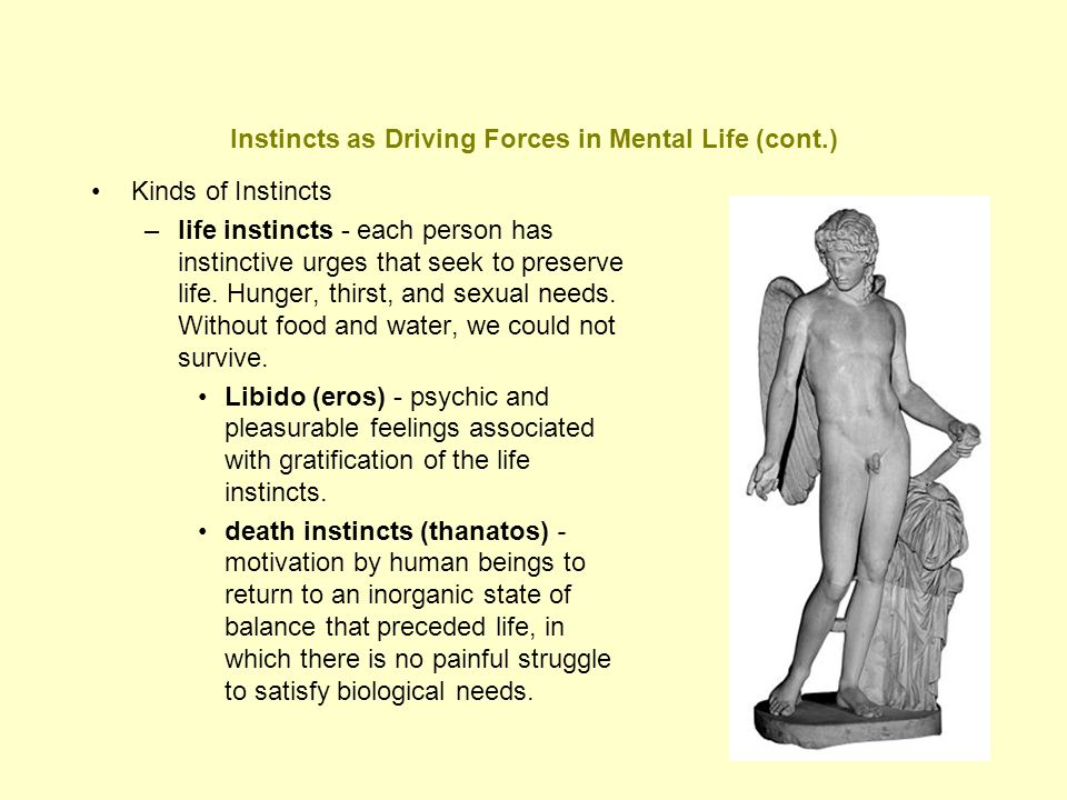 Instincts as Driving Forces in Mental Life (cont.)