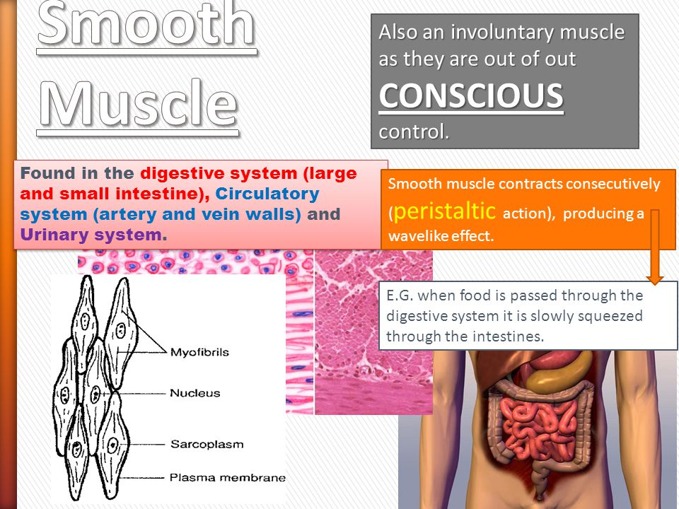 Also an involuntary muscle as they are out of out CONSCIOUS control.