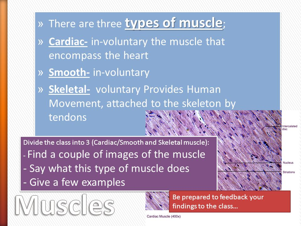 Muscles There are three types of muscle;
