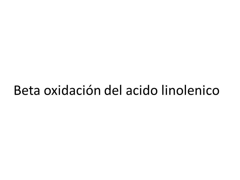 Beta oxidación del acido linolenico