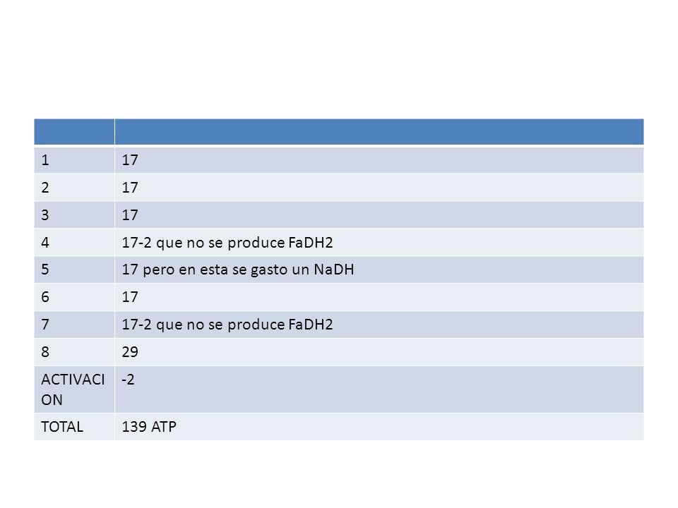 1 17. 2. 3. 4. 17-2 que no se produce FaDH2. 5. 17 pero en esta se gasto un NaDH. 6. 7. 8.