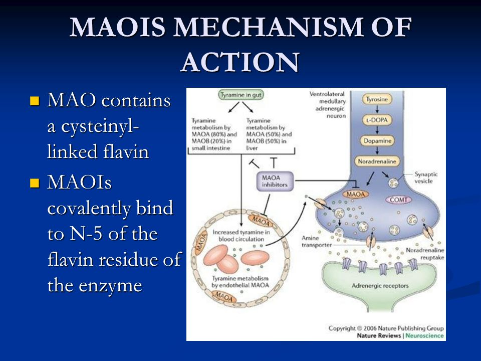 MAOIS MECHANISM OF ACTION