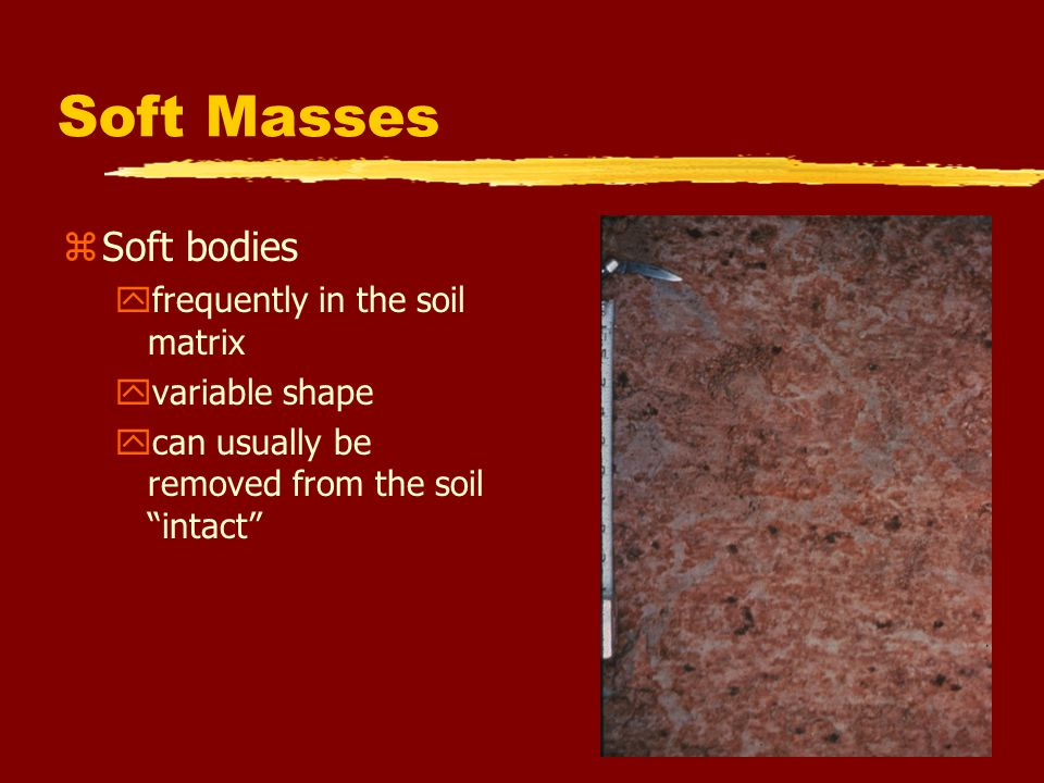 Soft Masses Soft bodies frequently in the soil matrix variable shape