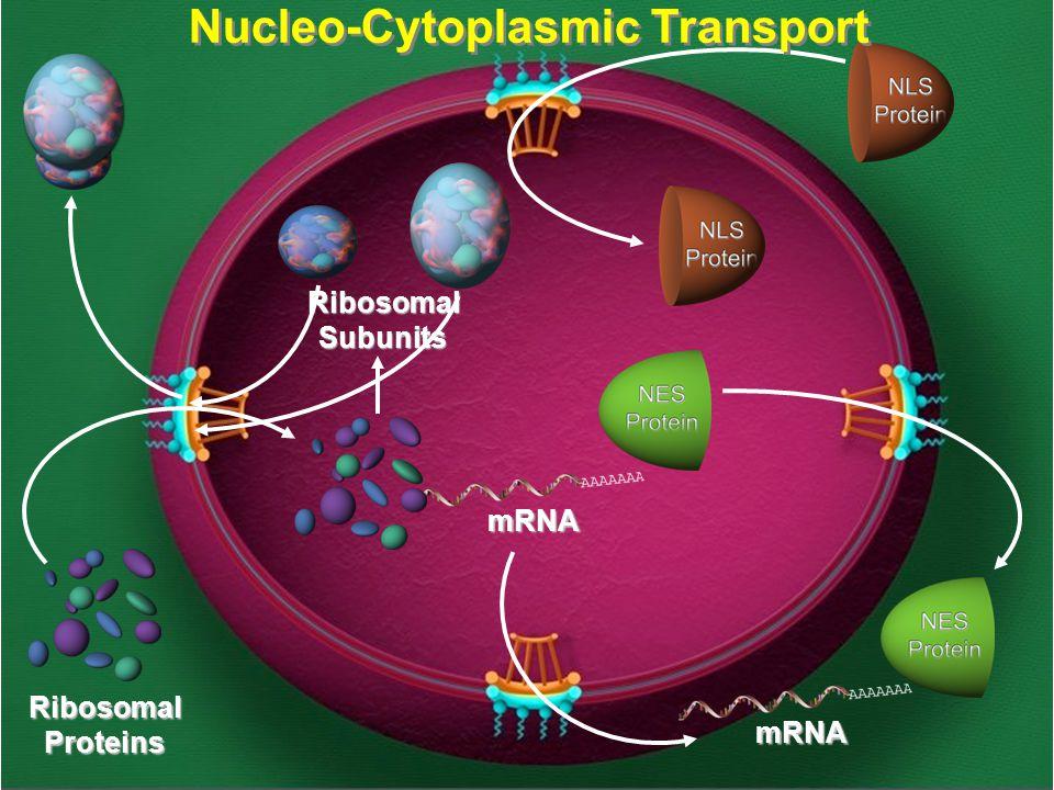Nucleo-Cytoplasmic Transport