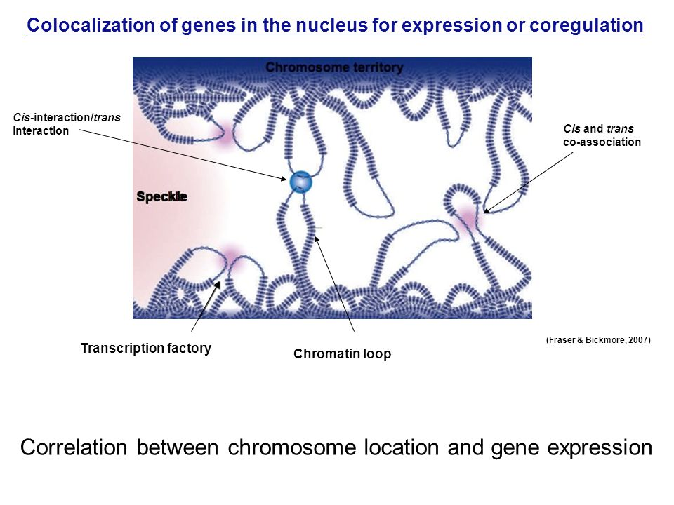 Correlation between chromosome location and gene expression