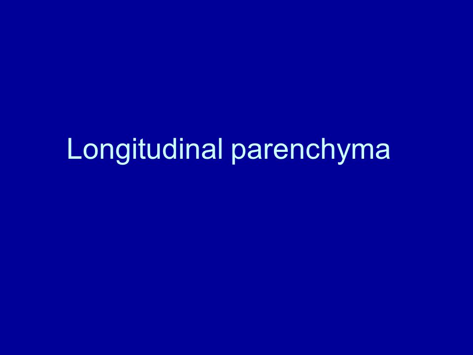 Longitudinal parenchyma