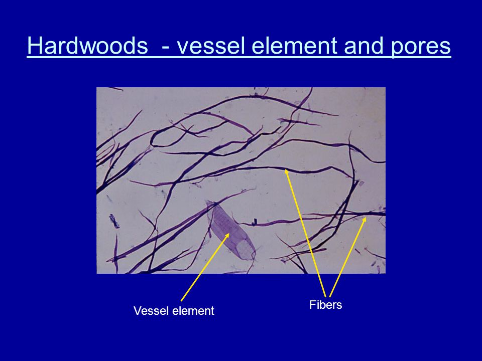 Hardwoods - vessel element and pores