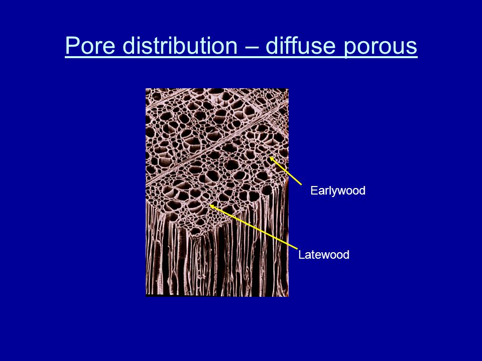 Pore distribution – diffuse porous