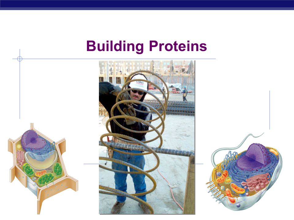Building Proteins 2007-2008