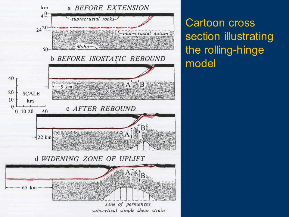 Cartoon cross section illustrating the rolling-hinge model