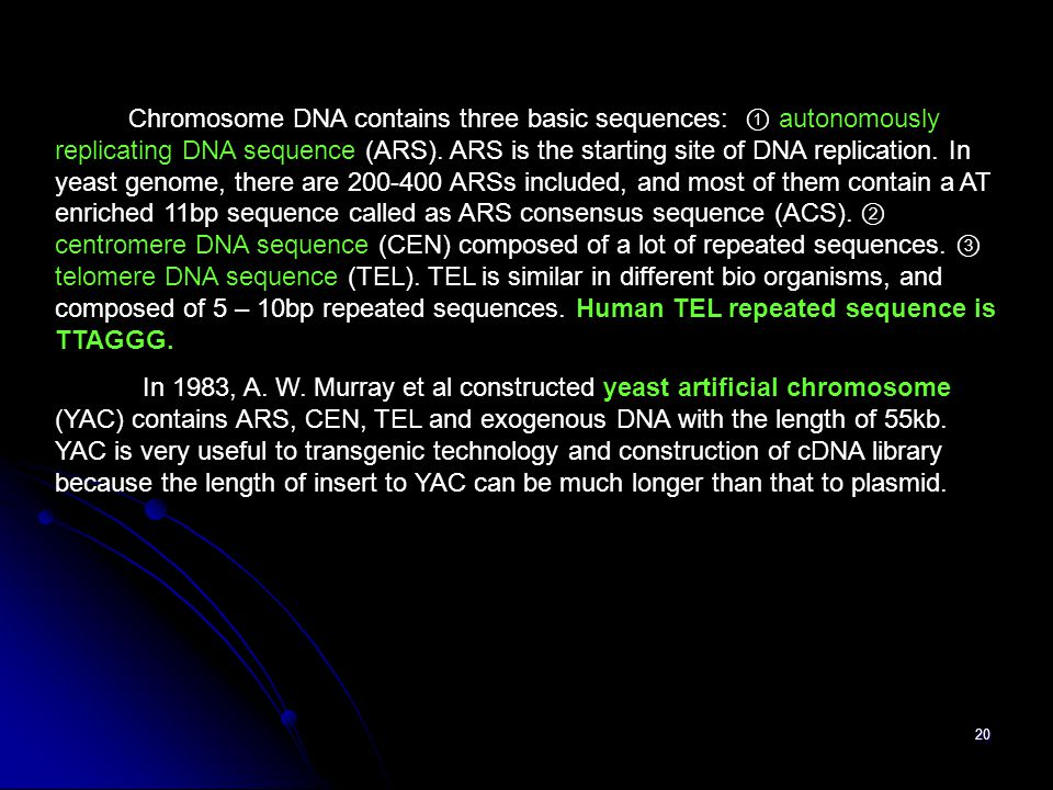 Chromosome DNA contains three basic sequences: ① autonomously replicating DNA sequence (ARS). ARS is the starting site of DNA replication. In yeast genome, there are 200-400 ARSs included, and most of them contain a AT enriched 11bp sequence called as ARS consensus sequence (ACS). ② centromere DNA sequence (CEN) composed of a lot of repeated sequences. ③ telomere DNA sequence (TEL). TEL is similar in different bio organisms, and composed of 5 – 10bp repeated sequences. Human TEL repeated sequence is TTAGGG.