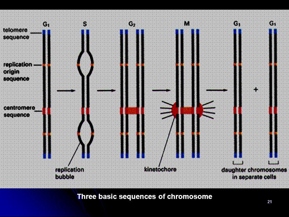 Three basic sequences of chromosome