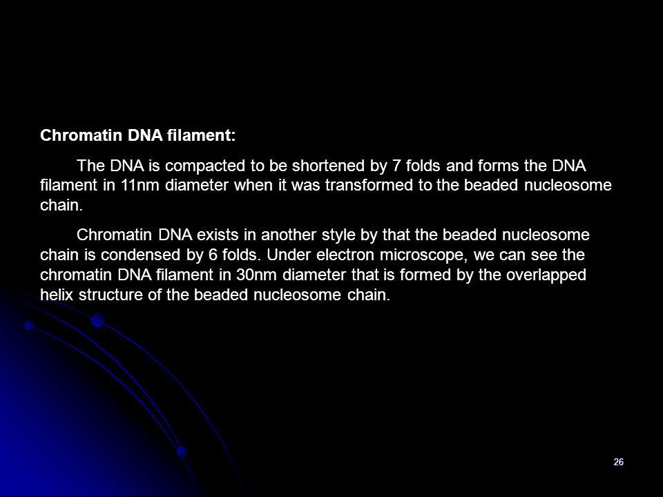 Chromatin DNA filament: