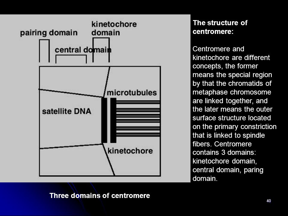 Three domains of centromere