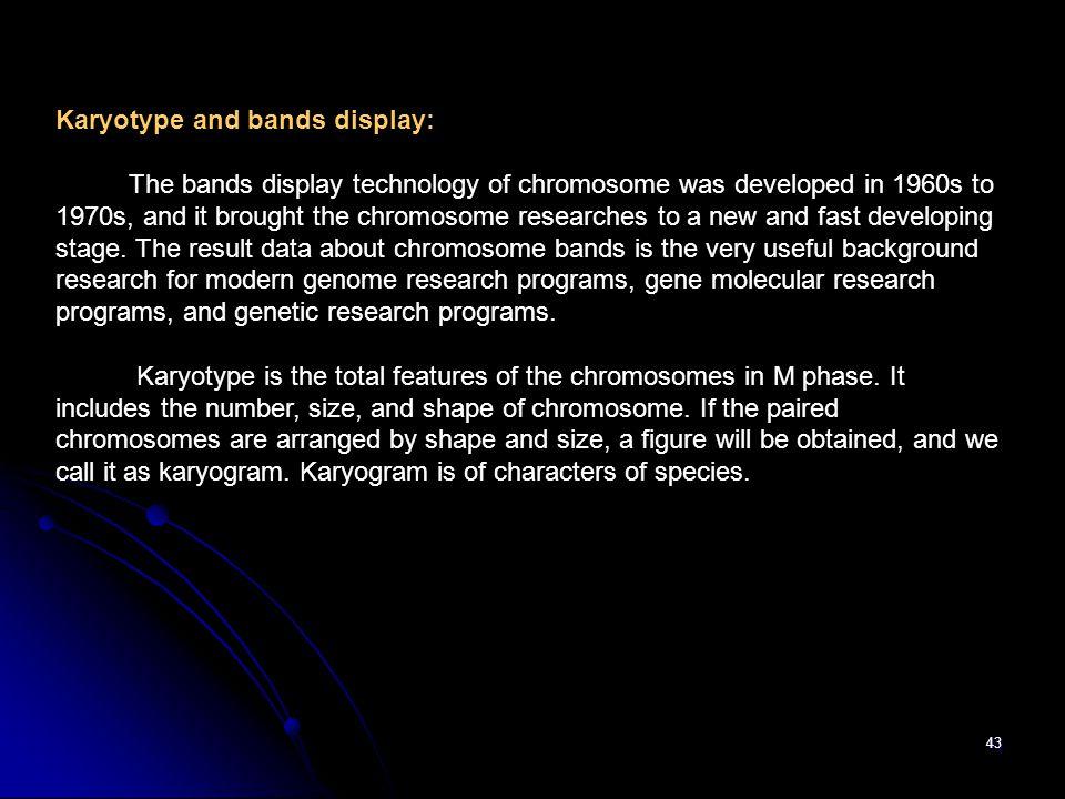Karyotype and bands display: