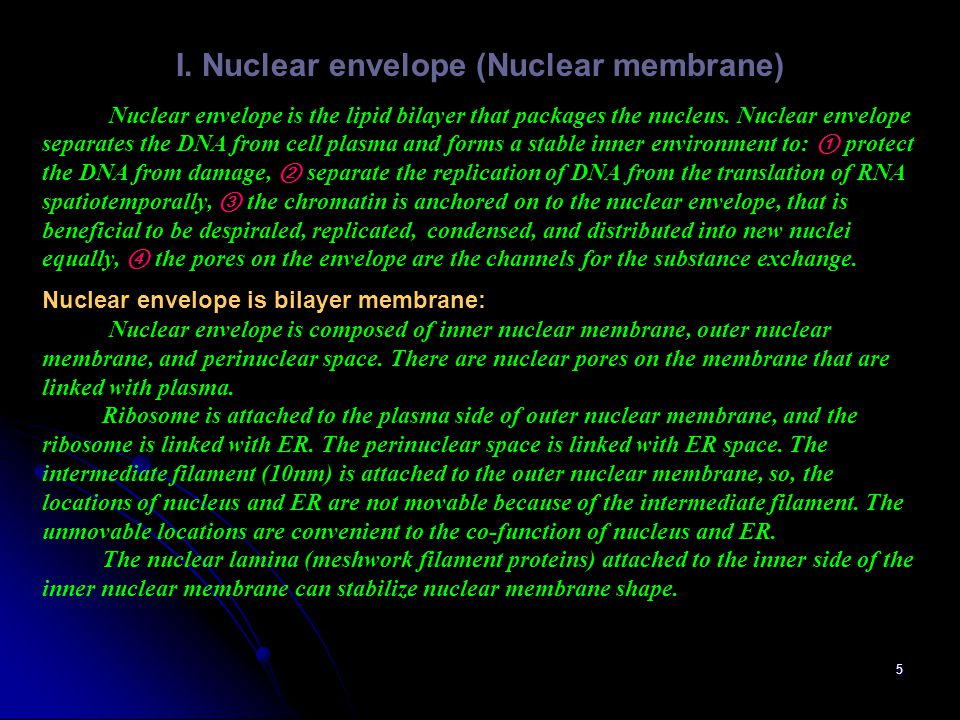 I. Nuclear envelope (Nuclear membrane)