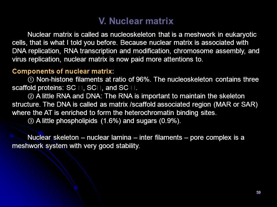 V. Nuclear matrix