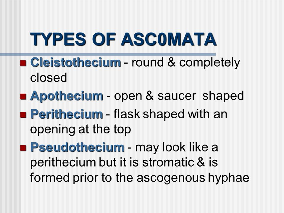 TYPES OF ASC0MATA Cleistothecium - round & completely closed