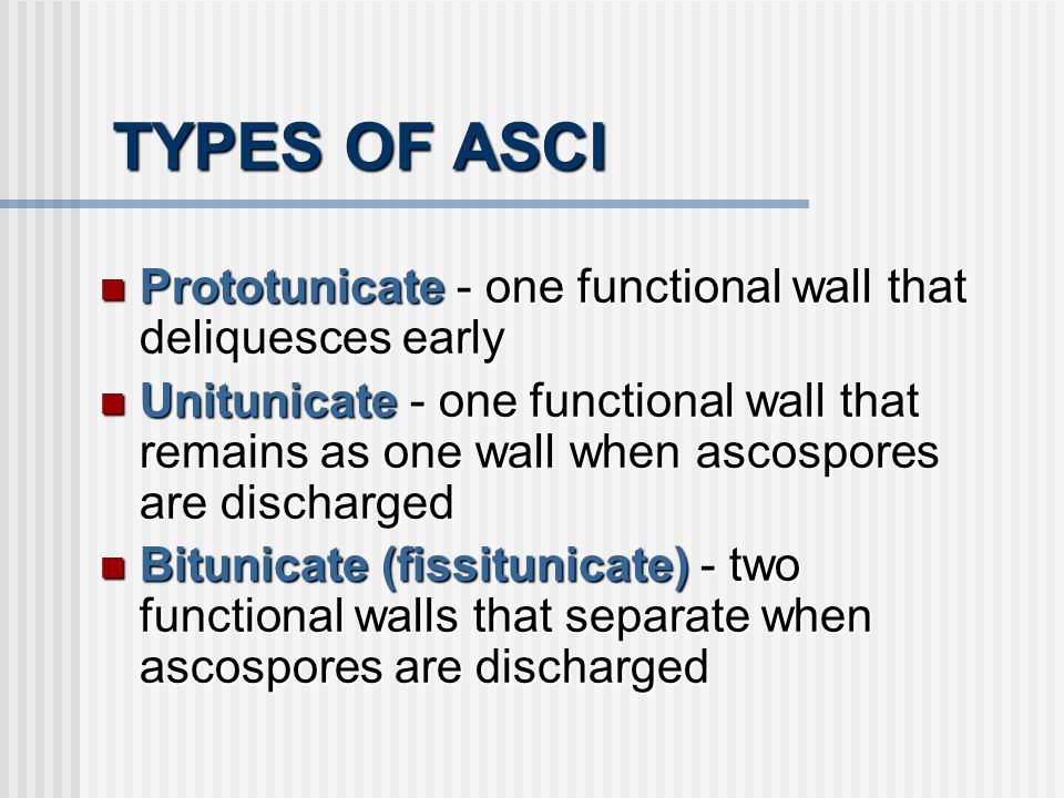 TYPES OF ASCI Prototunicate - one functional wall that deliquesces early.