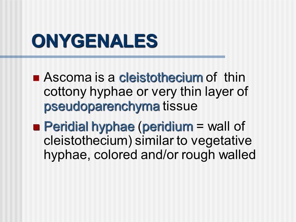 ONYGENALES Ascoma is a cleistothecium of thin cottony hyphae or very thin layer of pseudoparenchyma tissue.