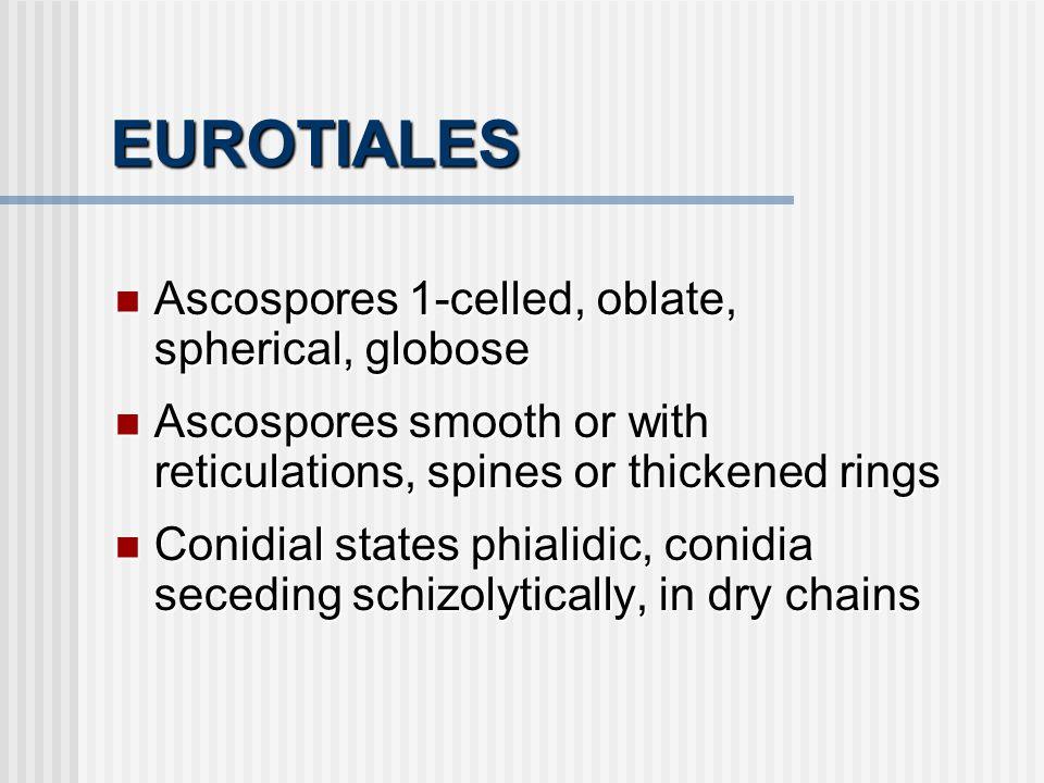 EUROTIALES Ascospores 1-celled, oblate, spherical, globose