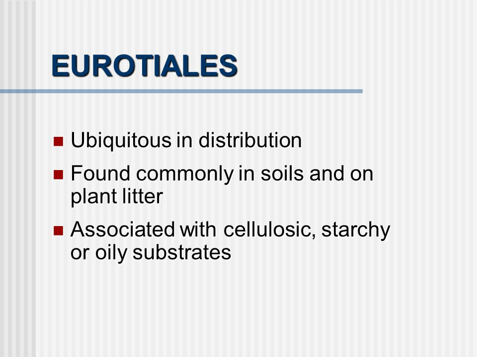 EUROTIALES Ubiquitous in distribution