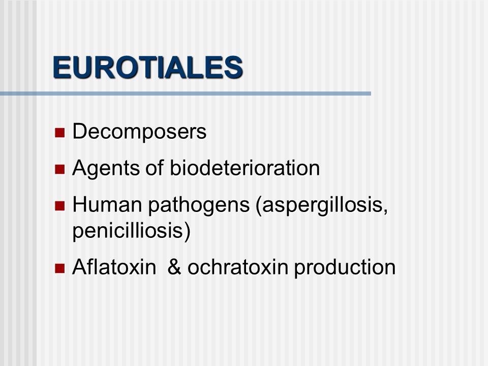EUROTIALES Decomposers Agents of biodeterioration