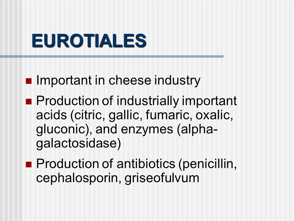 EUROTIALES Important in cheese industry