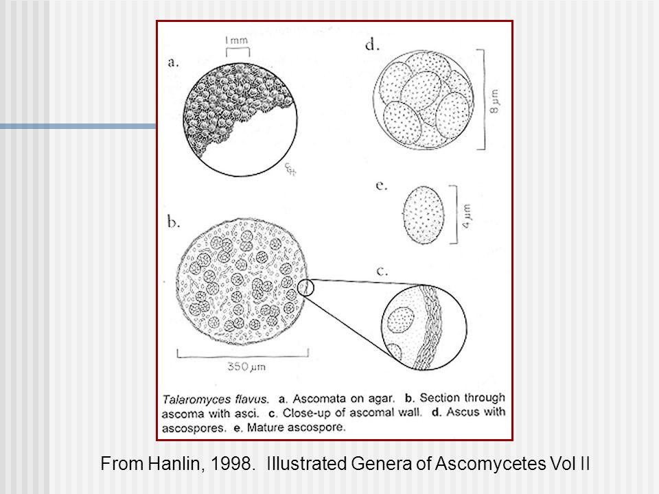 From Hanlin, 1998. Illustrated Genera of Ascomycetes Vol II