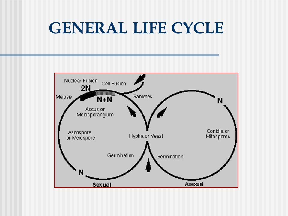 GENERAL LIFE CYCLE