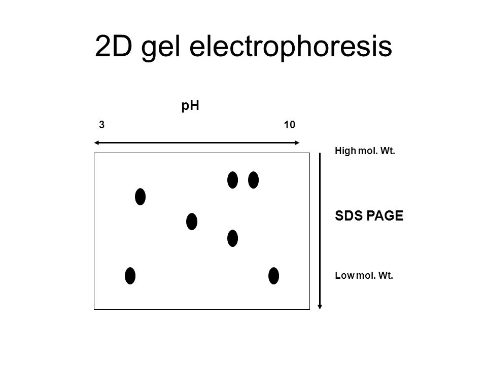 2D gel electrophoresis SDS PAGE Low mol. Wt. High mol. Wt. pH 3 10