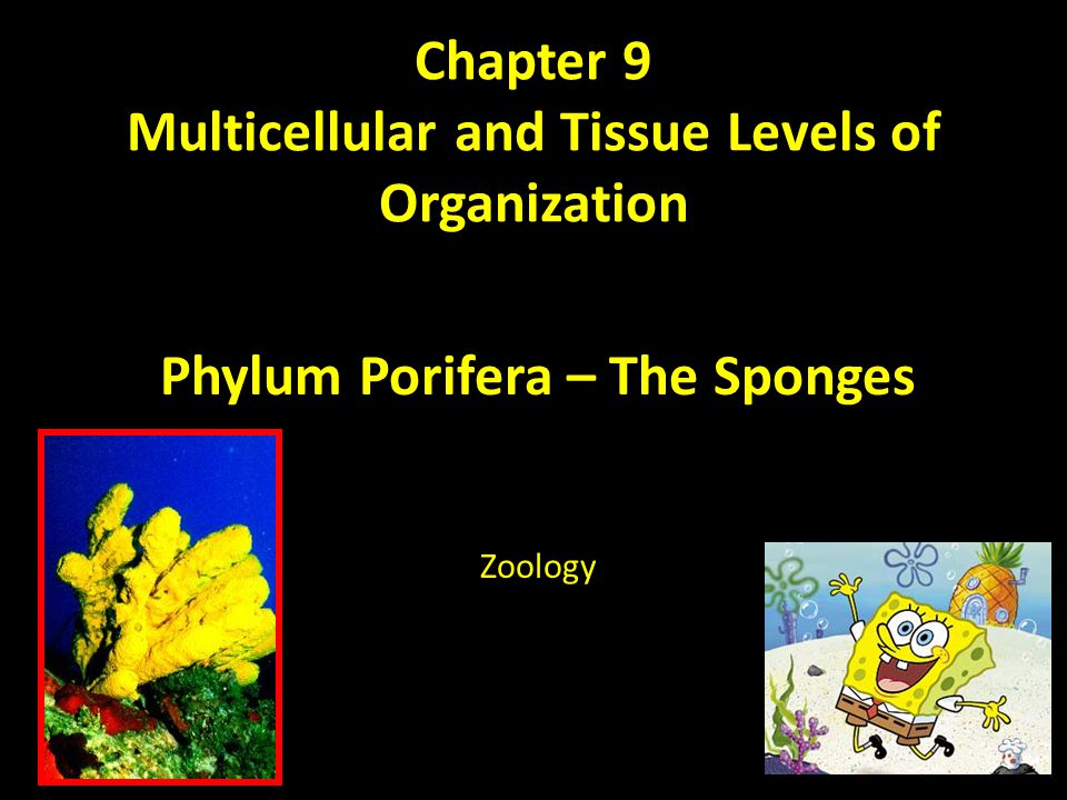 Chapter 9 Multicellular and Tissue Levels of Organization