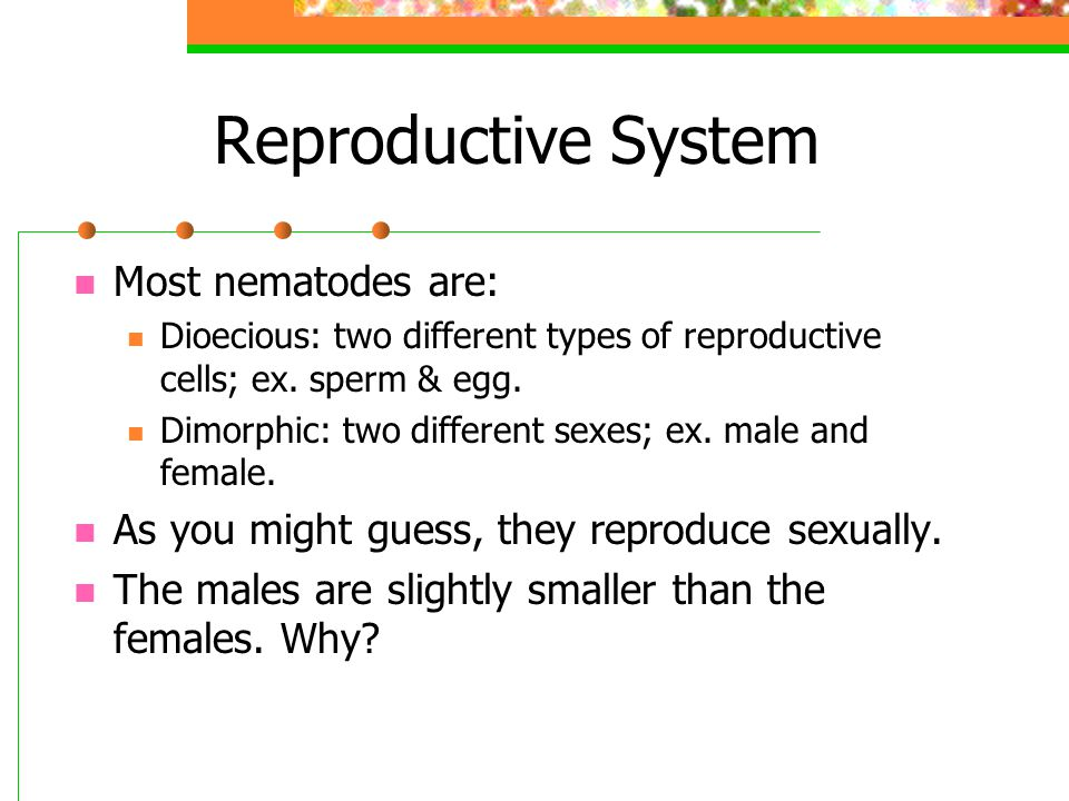 Reproductive System Most nematodes are: